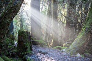 weindorfers-forest-walk-2365608_640